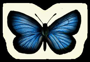 blue-butterfly2